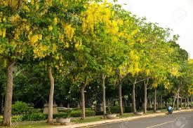 List of shady trees in pakistan - Aziz Nursery Farm